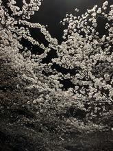 201903sakura_2.jpg